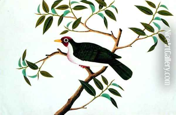 Rambootan Boorong Perling Jantan, from 'Drawings of Birds from Malacca', c.1805-18 Oil Painting - Anonymous Artist