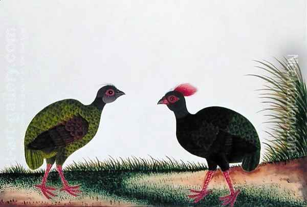 The Hen and the Cock, Sie-ole, from 'Drawings of Birds from Malacca', c.1805-18 Oil Painting - Anonymous Artist