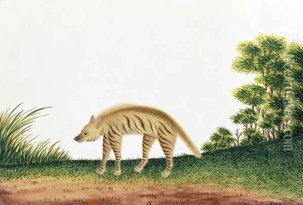 Hyena, from 'Drawings of Animals, Insects and Reptiles from Malacca', c.1805-18 Oil Painting - Anonymous Artist