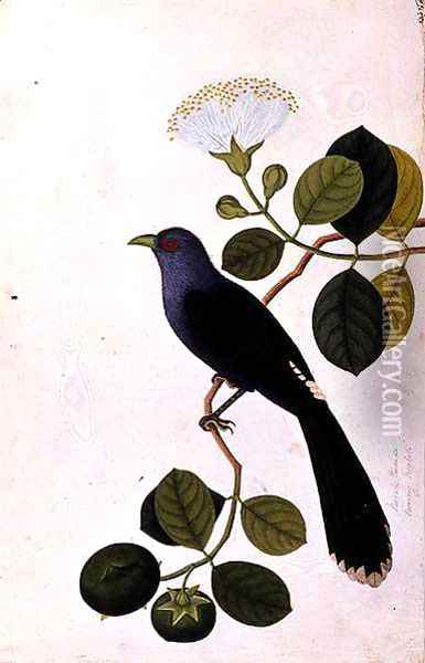 Booah Piedada, Boorong Boobote, from 'Drawings of Birds from Malacca', c.1805-18 Oil Painting - Anonymous Artist
