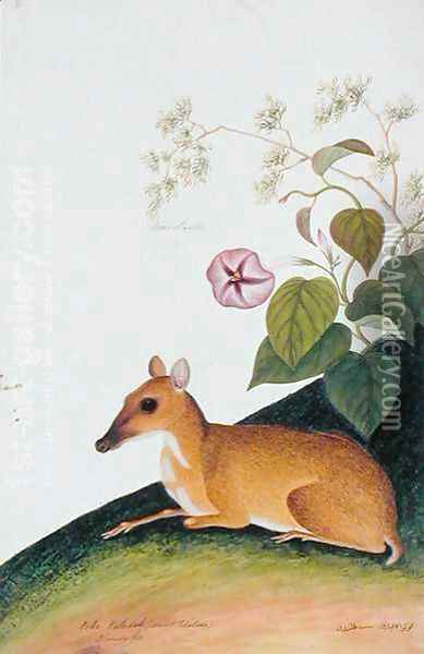 Poko Kelcdik (Sweet Potatoes) Plando ko, from 'Drawings of Animals, Insects and Reptiles from Malacca', c.1805-18 Oil Painting - Anonymous Artist