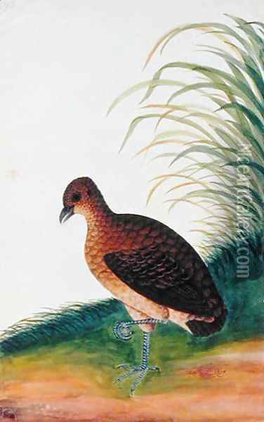Exotic Bird, from 'Drawings of Birds from Malacca', c.1805-18 (6) Oil Painting - Anonymous Artist