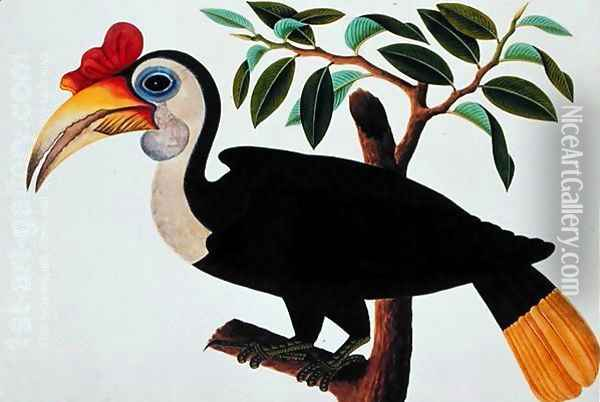 Ingang, from 'Drawings of Birds from Malacca', c.1805-18 Oil Painting - Anonymous Artist
