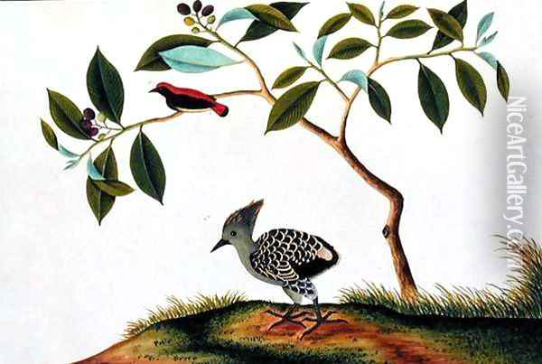 Sepah Pootrie, from 'Drawings of Birds from Malacca', c.1805-18 Oil Painting - Anonymous Artist