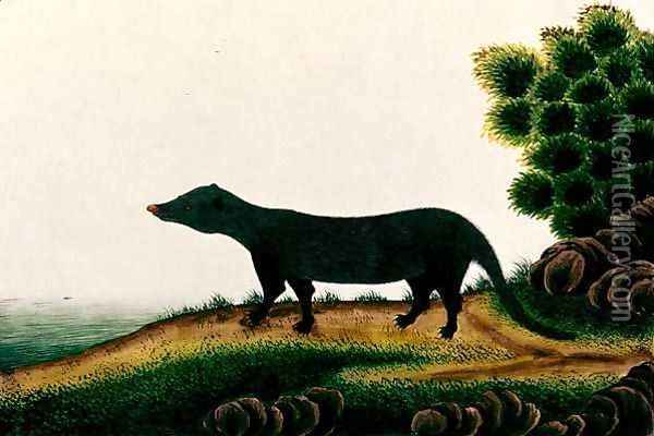 Furred mammal, from 'Drawings of Animals, Insects and Reptiles from Malacca', c.1805-18 Oil Painting - Anonymous Artist