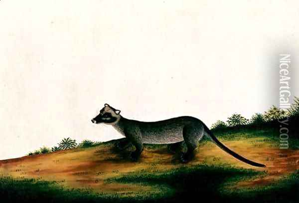 Furred Animal, from 'Drawings of Animals, Insects and Reptiles from Malacca', c.1805-18 Oil Painting - Anonymous Artist