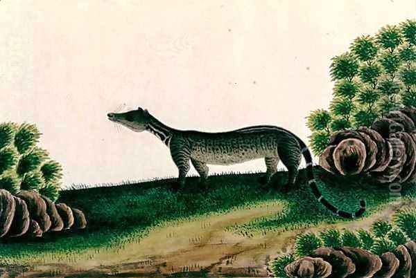 Moosang Gelong or Moosang Jibbet (Malay), from 'Drawings of Animals, Insects and Reptiles from Malacca', c.1805-18 Oil Painting - Anonymous Artist