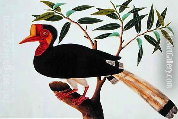 Jibang Aluntooa, from 'Drawings of Birds from Malacca', c.1805-18 Oil Painting - Anonymous Artist