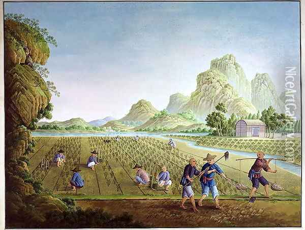 Rice cultivation in China, transplanting plants Oil Painting - Anonymous Artist