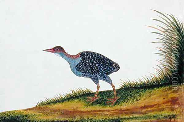 Exotic Bird, from 'Drawings of Birds from Malacca', c.1805-18 (7) Oil Painting - Anonymous Artist