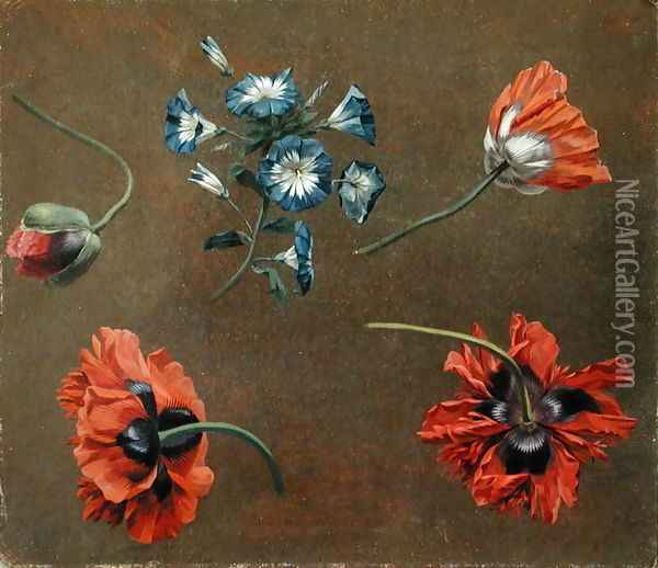 Poppies and Tradascanthus Oil Painting - Anonymous Artist