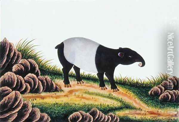 Tapir of Malacca, from 'Drawings of Animals, Insects and Reptiles from Malacca', c.1805-18 Oil Painting - Anonymous Artist