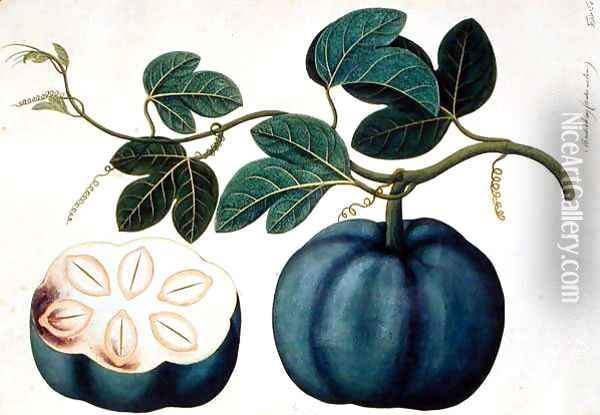 Mendickay or Water Melon, from 'Drawings of Plants from Malacca', c.1805-18 Oil Painting - Anonymous Artist