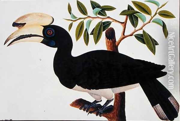 Ke-ke, from 'Drawings of Birds from Malacca', c.1805-18 (4) Oil Painting - Anonymous Artist