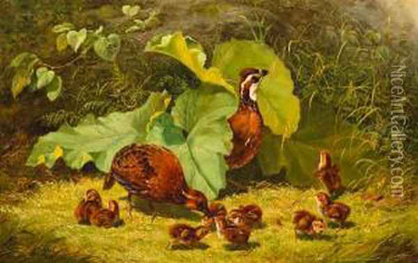 Quail And Young Oil Painting - Arthur Fitzwilliam Tait