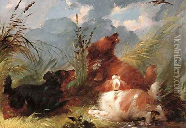 Spaniels flushing out snipe Oil Painting - George Armfield