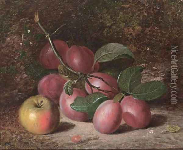 Plums and an apple, on a mossy bank Oil Painting - Charles Archer
