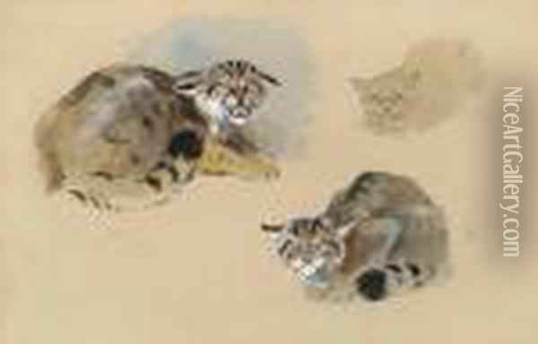 Studies Of A Wild Cat Oil Painting - Archibald Thorburn