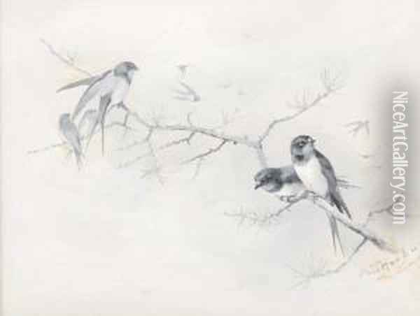 Swallows On A Branch Oil Painting - Archibald Thorburn