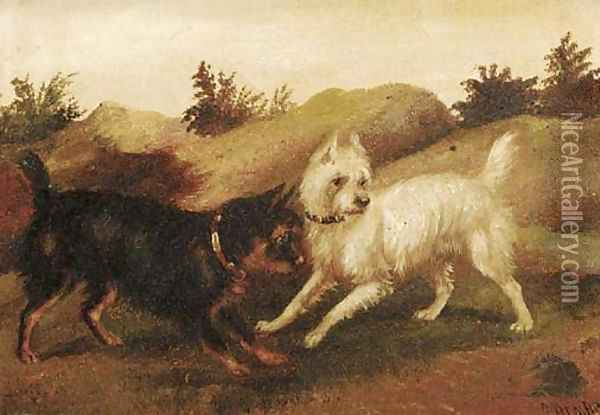 Terriers ratting Oil Painting - George Armfield