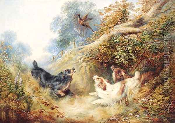 Spaniels flushing out a Pheasant Oil Painting - George Armfield