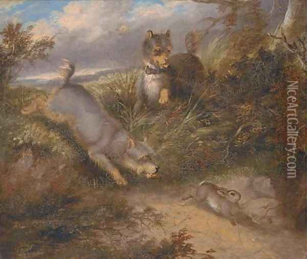 Terriers chasing a rabbit Oil Painting - George Armfield