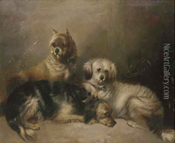 Three mischievous terriers Oil Painting - George Armfield