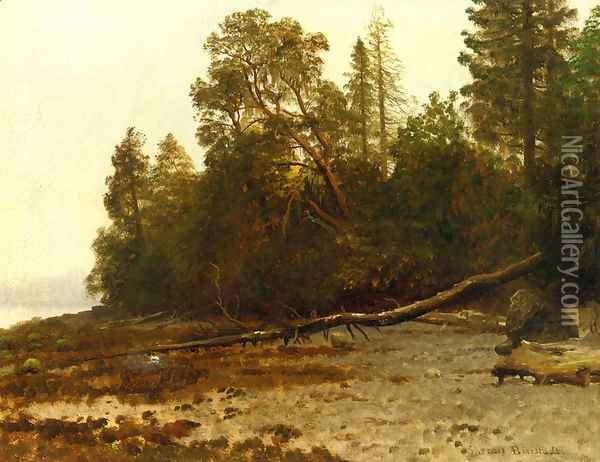 The Fallen Tree Oil Painting - Albert Bierstadt
