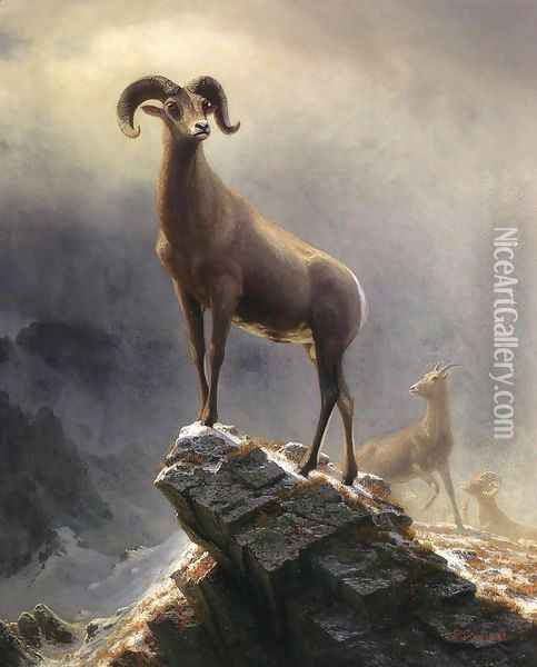 Rocky Mountain Sheep 1 Oil Painting - Albert Bierstadt