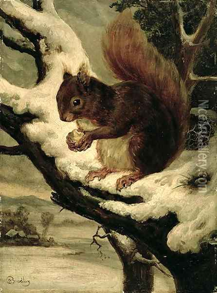 A Red Squirrel Eating a Nut Oil Painting - Basil Bradley