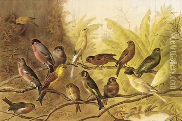 A chorus of song birds in an aviary Oil Painting - Henry Bright