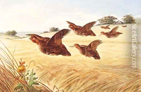 A Covey of Partridge in flight over a Field of Barley Oil Painting - Henry Bright