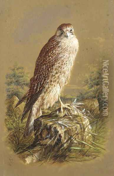 A sparrow hawk Oil Painting - Henry Bright