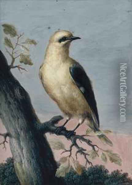 A Golden Oriole Perched On A Branch Oil Painting - Christophe-Ludwig Agricola