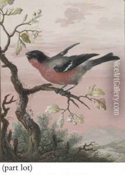 Birds, Each Perched On A Branch Oil Painting - Christophe-Ludwig Agricola