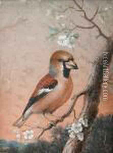 Studies Of Birds, A Pair Oil Painting - Christophe-Ludwig Agricola