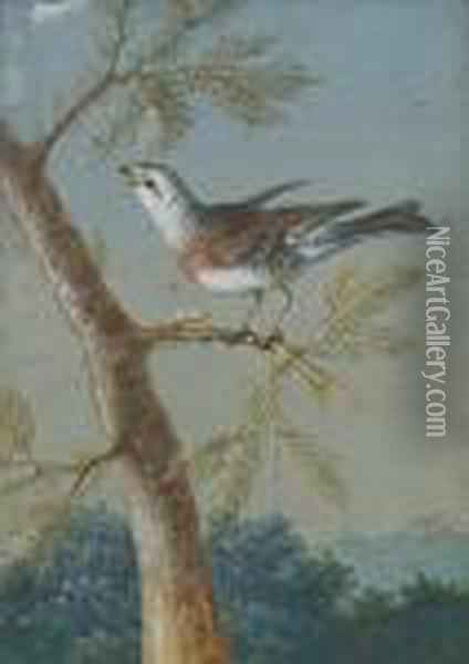 A Finch Perched On A Pine Branch Oil Painting - Christophe-Ludwig Agricola