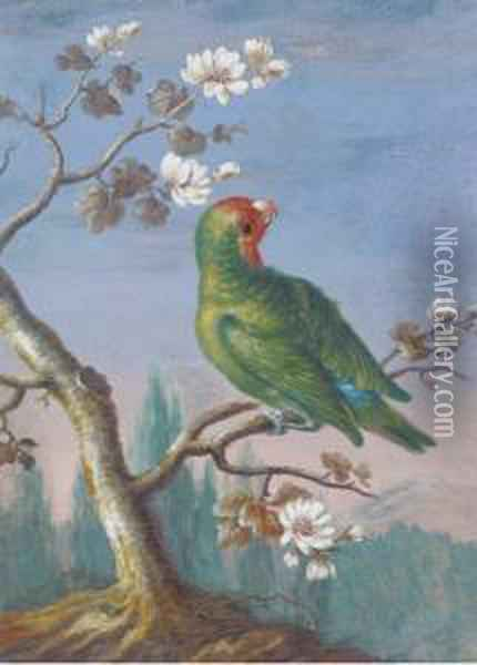 A Red Fronted Parakeet Oil Painting - Christophe-Ludwig Agricola