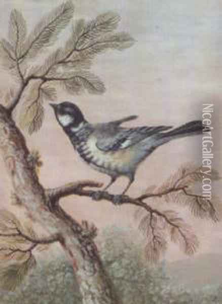Blue Tit Perched On A Pine Branch With A Fly (#) Great Tit Perched Oil Painting - Christophe-Ludwig Agricola