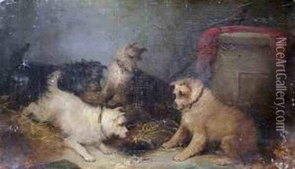 Terriers, On The Look Out! Oil Painting - George Armfield