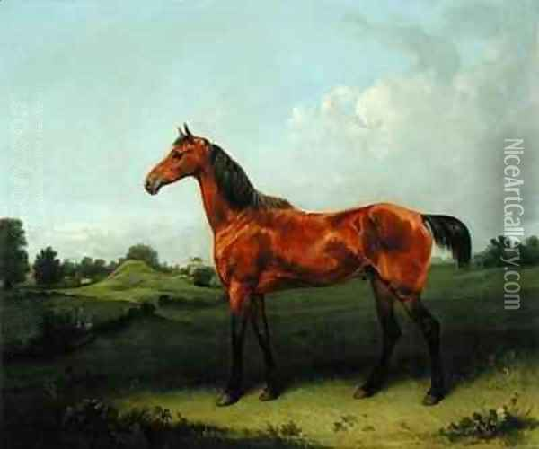 A Bay Horse in a Field Oil Painting - Edmund Bristow