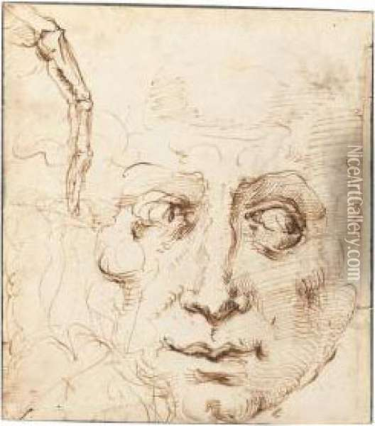 Recto: Sheet Of Studies With The Head Of A Man And A Skeletal Finger Oil Painting - Domenico Beccafumi