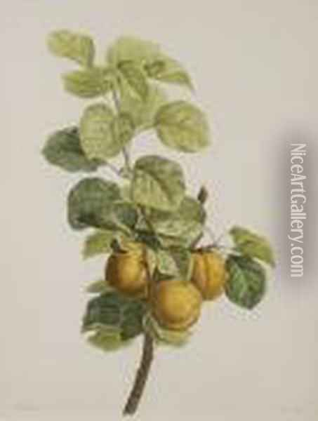 Pears And Leaves On A Bough Oil Painting - Pancrace Bessa