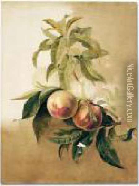 Study Of Peaches On A Branch Oil Painting - Pancrace Bessa