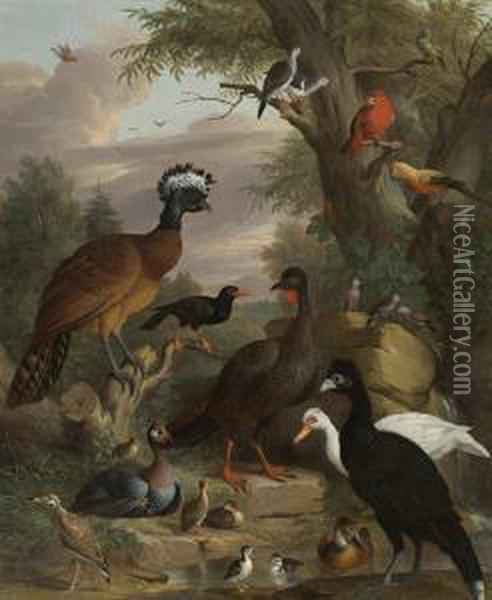 An Assembly Of Birds In A Parkland Landscape, Including A Blue Peacock Oil Painting - Jakob Bogdani Eperjes C
