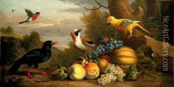 A Bullfinch, A Chough, A Jay And