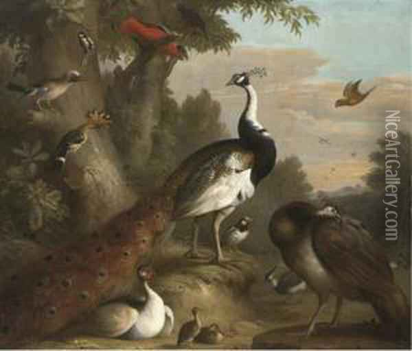 A Wooded Landscape With Peacocks And Other Birds In Theforeground Oil Painting - Jakob Bogdani Eperjes C
