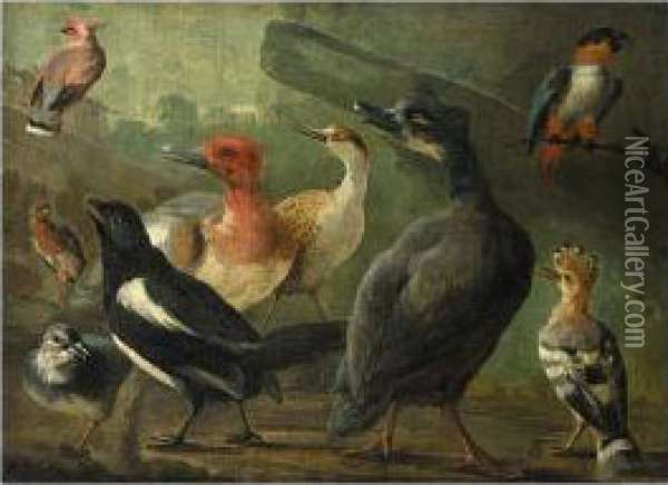 Landscape With A Black-capped Caique Parrot, A Hoopoe, A Magpie And Other Birds Oil Painting - Jakob Bogdani Eperjes C
