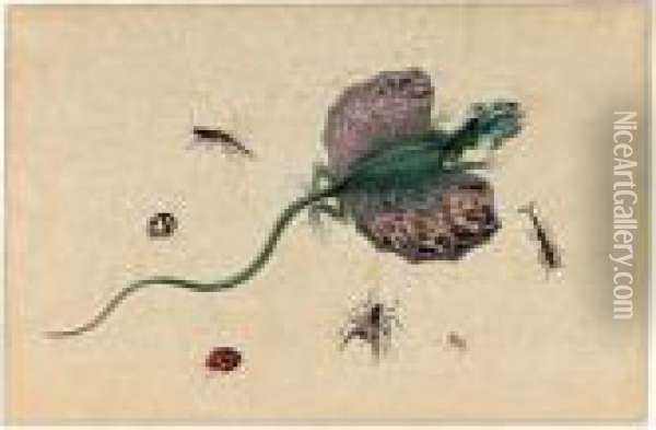 A Flying Dragon And Various Insects Oil Painting - Johannes Bronkhorst