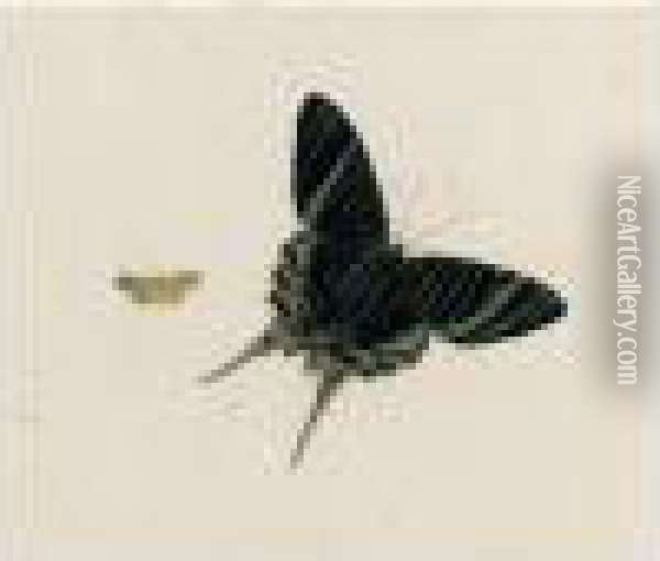 A Butterfly And A Moth Oil Painting - Johannes Bronkhorst